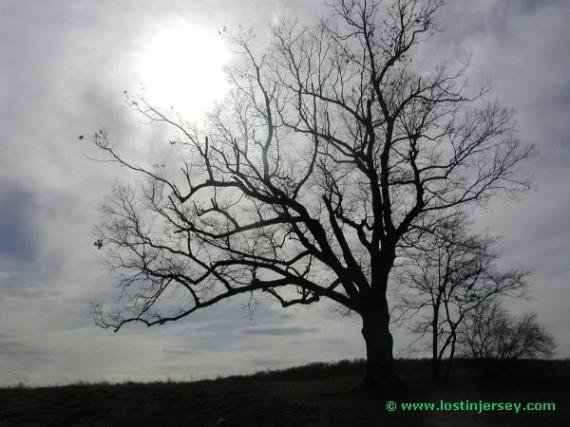 treesunlight