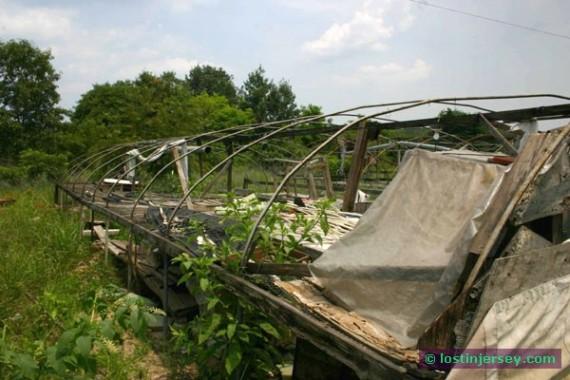 roadsidefarm3